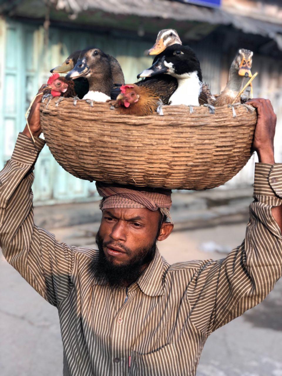 শীতের সকালে হাঁস মুরগী মাথায় নিয়ে বাজার যাত্রা। বরগুনা শহর থেকে তোলা