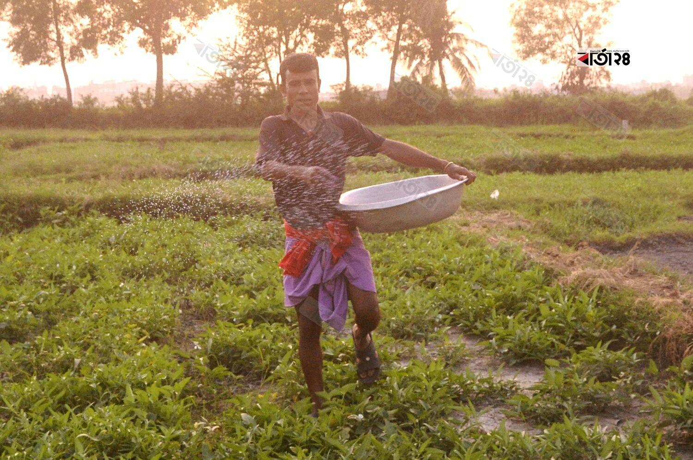 জমিতে সার দিচ্ছেন একজন কৃষক। ছবিটি নারায়ণগঞ্জের শ্যামলনগর এলাকা থেকে তুলেছেন মেহেদী হাসান।