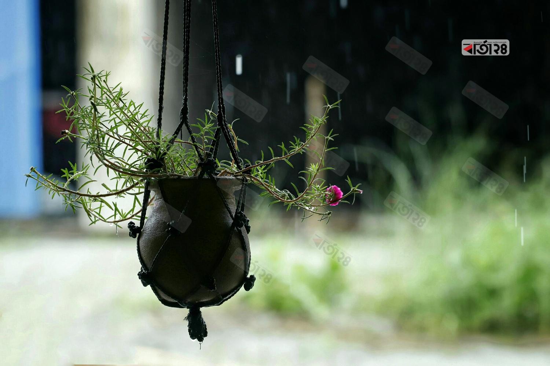 বারান্দায় ঝুলে থাকা মাটির হাড়িতে ফুটে আছে টাইম ফুল। ছবি : সুমন শেখ
