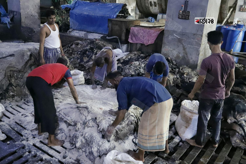 চামড়াগুলোকে লবণ দেয়া হচ্ছে। ছবিটি হেমায়েতপুর ট্যানারী থেকে তুলেছেন সুমন শেখ।