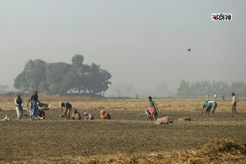 জমিতে আলু রোপন করতে ব্যস্ত কৃষকের দল। ছবিটি সিরাজদিখান, সাতগাঁও এলাকা থেকে তুলেছেন সুমন শেখ।