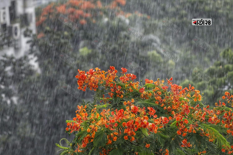 ঝুম বৃষ্টি যেন রিনিঝিনি নুপুরের ধ্বনি। ছবিটি গুলশান এলাকা থেকে তুলেছেন সুমন শেখ।
